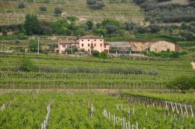 Un vignoble à Negrar, dans l'appellation Valpolicella.