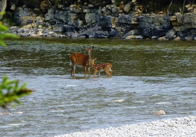 La faune est très présente sur l'île.