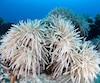 Le réchauffement de l'eau a provoqué un épisode de blanchissement sans précédent en Australie, menaçant la Grande barrière de corail, joyau classé au Patrimoine mondial.