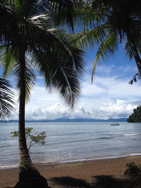 Vue sur le Golfe Dulce depuis une plage déserte le long de laquelle des cocotiers se courbent élégamment.
