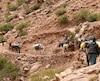 Sur cette photo d'archives prise en 2016, des gens font de la randonnée à dos d'âne dans le Haut-Atlas marocain.