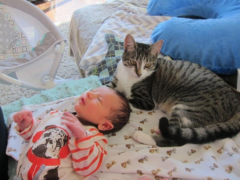 Des parents oublient de dire à leur chat qu'ils attendaient un bébé