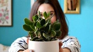 Une vente de plantes «pas tuables» ce week-end