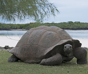 Une tortue pas mal sexy.