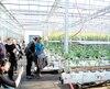 Samedi et dimanche, plus de 1000 personnes ont visité la première serre commerciale au monde à avoir été aménagée sur un toit, dans le cadre de journées portes ouvertes organisées par les Fermes Lufa.