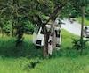 Le minibus délabréconduit par l'homme sur la photo a dévalé la pente à droite avant de percuter un arbre.