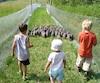 Saveurs : Plume des champs