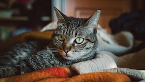 Image principale de l'article Un chat est candidat aux élections