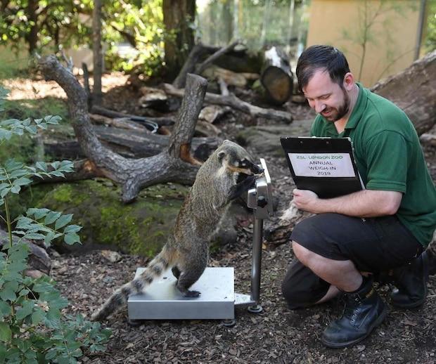 Image principale de l'article C'est jour de pesée pour les animaux du zoo