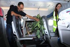 Un koala prend l'avion... pour l'Écosse