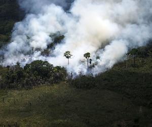 Feux en Amazonie