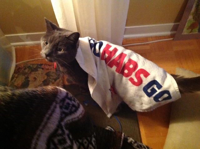 Schumi le chat de Lilli Leblond