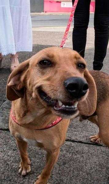 1er procès d'un chien victime de maltraitance