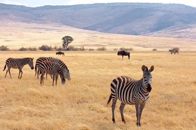 Dans le cratère du Ngorongoro.