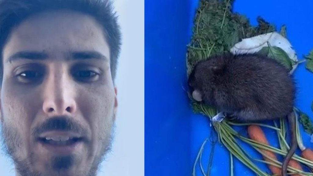 Kevin Bazinet trouve et sauve un rat dans sa cour et fait beaucoup de stories Instagram poignantes à propos de ça