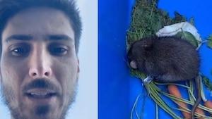 Kevin Bazinet trouve et sauve un rat dans sa cour
