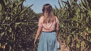Un labyrinthe de maïs géant dans le noir
