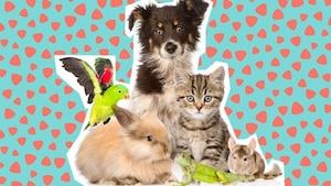 Image principale de l'article Êtes-vous capables d'identifier ces bébés animaux?