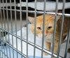 Selon la SPA, 1500chats en bonne santé sont euthanasiés chaque année pour lutter contre la surpopulation animale.