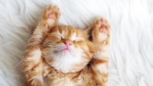 5 solutions à 5 problèmes avec votre chat
