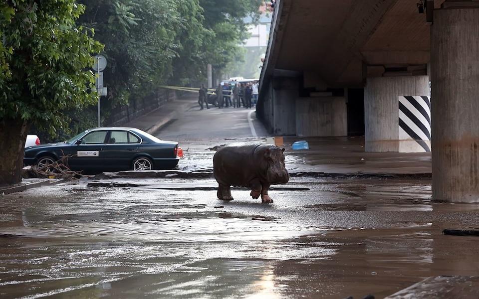 Les animaux du zoo se sont échappés à cause des innondations.