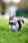 Il est important, pendant les vacances, de décrocher de son travail et de mettre son cerveau à « écureuil ».