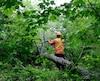 La coupe d'arbres du petit boisé proche de l'école secondaire De Rochebelle a débuté vendredi matin.