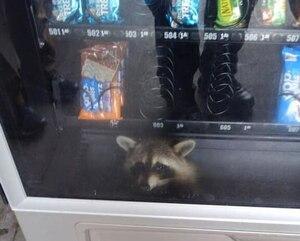 Il reste coincé dans une machine distributrice