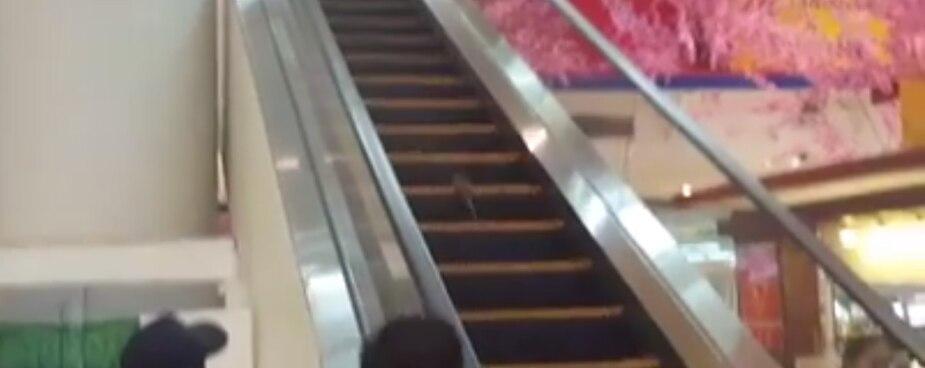 Un rat tente de monter un escalier roulant