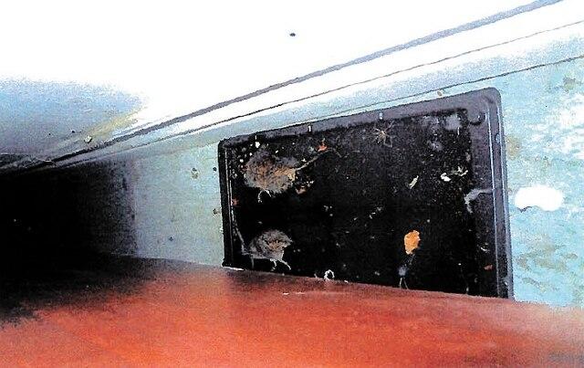 Non loin de l'entrée, proche du meuble où était posée la caisse enregistreuse, les inspectrices ont noté la présence de deux cadavres de souris dans une trappe collante sur le plancher.