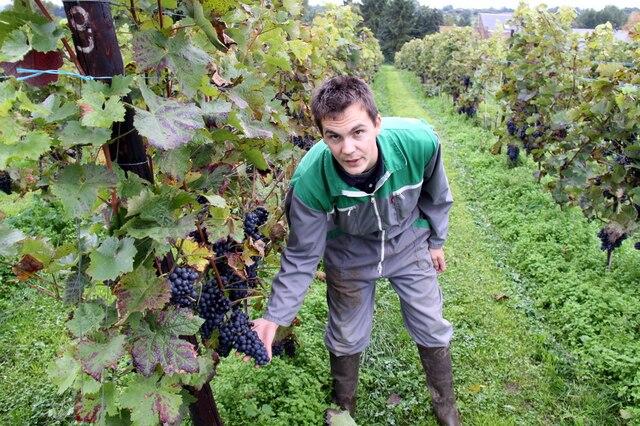 Jean-François Baele dans sa vigne du  Domaine du Ry d'Argent.