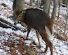 May a vécu un choc traumatique, mais elle est heureuse d'être de retour dans sa forêt.
