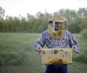 L'apiculteur Etienne Lapierre de la miellerie urbaine Alvéole examine une ruche dans un champ de Châteauguay.