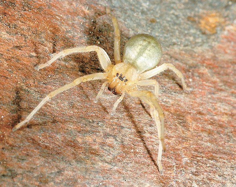 Une araign e grosse comme un 2 le journal de montr al for Araignee de maison