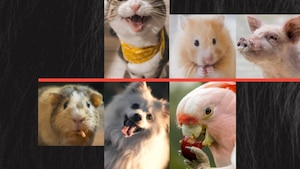 Inscrivez votre animal à cette nouvelle émission!