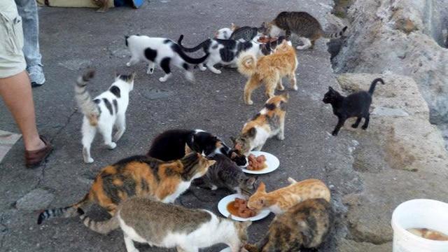 ...les permis de gardien de 15 chats ou plus sont efficaces
