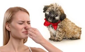 Est-ce que votre chien fait ça aussi?
