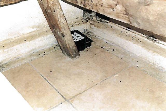 «Une centaine d'excréments de souris mélangés à de la poussière».