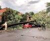Un arbre s'est écroulé rue de la Roche dans Ahuntsic.