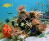 Corail poissons mer fond marin plongée