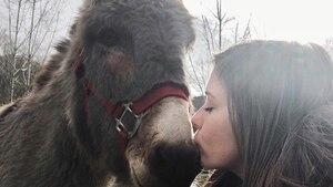 Image principale de l'article Baladez-vous en compagnie d'un âne en forêt