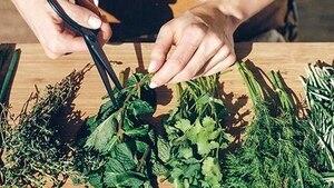 Image principale de l'article Le jardinage pour les nulles