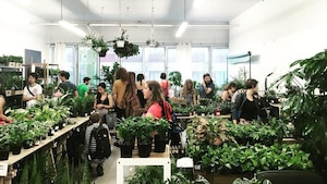 Image principale de l'article Une vente de plantes «pas tuables» ce week-end