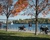 La navette fluviale reliera Pointe-aux-Trembles et le Vieux-Port de Montréal.