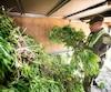 Lors de l'opération Cisaille en 2015, les policiers ont éradiqué une vaste plantation de cannabis dans le village de Saint-Elphège.