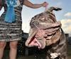 Martha, le chien le plus laid au monde.