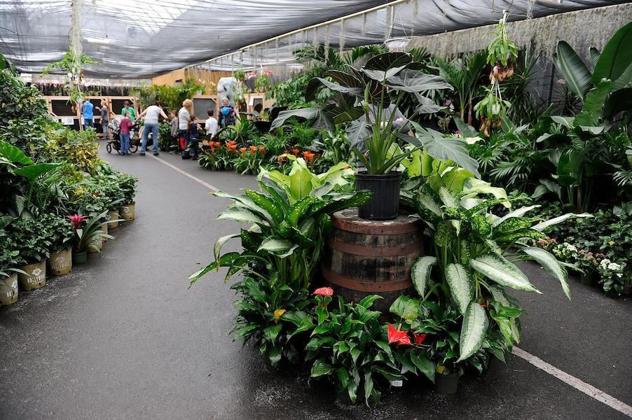 Le Retour De Papillons En Fete Au Centre Jardin Hamel Jdq
