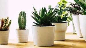Image principale de l'article 6 plantes d'intérieur faciles d'entretien!