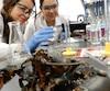 Mounia Akroun ( à gauche ) et Nouri Ardila au laboratoire de l'École Polytechnique où elles préparent leur bioplastique.