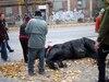 En octobre dernier, Black Jack s'effondrait en raison d'épuisement dans une rue du Vieux-Montréal. Deux mois plus tard, il reprenait goût à la vie dans un refuge au Saguenay.
